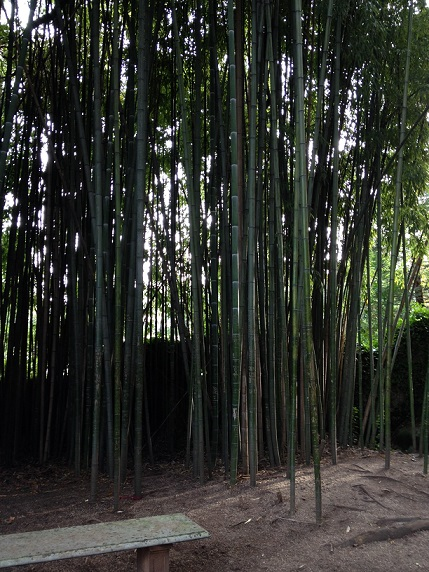 Bamboo gardens to rival those found in Japanese villages